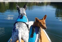 Adventure Dogs / Epic photos of adventures dogs and the humans they love.