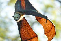 Bats / Interesting creatures