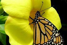 farfalle e libellule