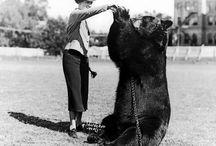 Baylor Bears / by Becki Steakley