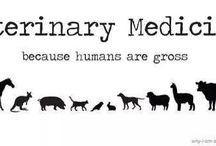 Veterinary / Tip, hints, and funnies of the veterinary world / by Kristen Pitsenbarger