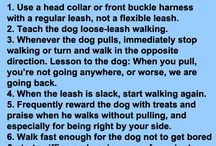 Dog training and ideas