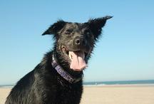 Jasper / My dog is a collie crossbreed