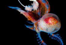 Underwater  / Wonderfull underwater pictures from around the globe!