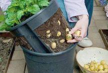 Sustentabilidade - agricultura