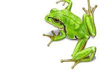 trevs frog tatt