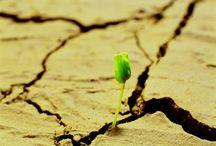 Persoonlijke groei en ontwikkeling