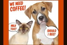 Cute Animals and Coffee / These are a few of our favorite things. / by Whole Latte Love .com