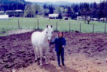 Our Horses / Pictures of some our horses we have owned over the years