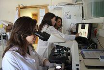 O que acontece em Portugal / Notícias sobre a área da Procriação Medicamente Assistida e Infertilidade em portugal