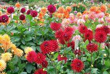 Сад. Цветы.