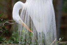 gevogelte