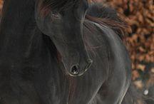 cavalos lindos / Cavalos