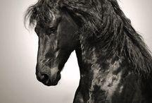 Lovak / Lovak, lovaglás