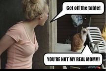 Funniest Cat Memes Ever! / by My Victoria Rose