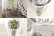 Bonsai terrarium  / Bonsai terrarium - great site for inspiration if you're interested in terrariums. The guy does a great youtube tutorial on how to make on in a lightbulb.