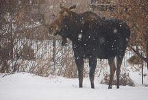 Beautiful Alberta Winter