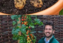 How to grow tomatos and pote