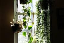 Hollies garden project