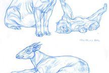Études animales