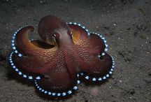 Octopus obsession / by Di Hernandez