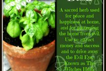 Herbs, die Kräuter, bylinky