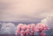 Cerezos en flor / by Natalia Jaramillo Barrera