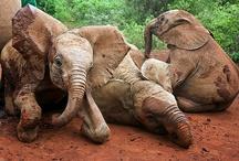 elephants / by Tamara Nichols-Mcdonald