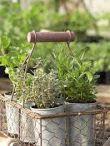 βότανα και μυρωδικά / βότανα και μυρωδικά