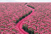 Things pink
