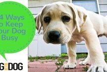 Tips & Tricks for Pet Owners / Good things to know as a pet owner