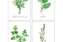 herbs an ferns