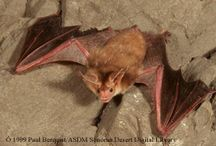 Wildlife: Bats