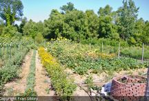Garden at Old Kinderhook / In three short years – the Old Kinderhook garden has grown to supply The Trophy Room restaurant  at the Lake of the Ozarks with seasonal vegetables for breakfast, lunch and dinner.