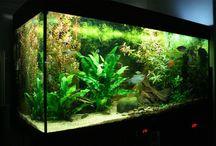 asie aquarium aquascaiping