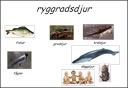 Animals: Ryggradslösa djur (Evertebrates)