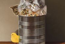 Cats painted