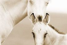 Horses / by Courtney Vander Werf