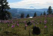 Local Destinations / Hiking and Surfing Destinations in Oregon and Washington