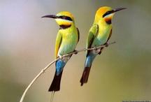 Beautiful Animal Photo's