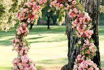 flower/garden