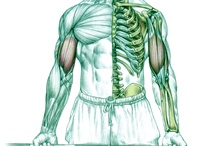 Frédéric Delavier provides an inside look at your muscles / Frédéric Delavier's stunning illustrations show you how muscles interact with surrounding joints and skeletal structures to improve your workout!