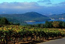 Napa County Lifestyle / All about the Napa County lifestyle including nature, business, wine country, properties and more! Visit us at http://russianriverlandandhome.com/ #russianriverliving #russianriverrealestate #socialmediamarketing