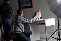 2015 SESJA FOTOGRAFICZNA Z OKAZJI DNIA KOTA / 14 marca 2015  odbędzie się profesjonalna sesja fotograficzna w Galerii Nierzeczywistej RSF Rzeszowskie Stowarzyszenie Fotograficzne.