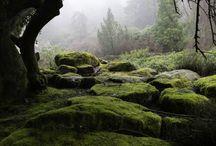 Moss Worlds