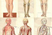 body&bone