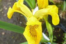 Yellow Garden / Turn your garden into a sea of Sunshine