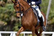 Horses / Horses,Competition,Dressage