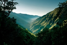 Madeira - Laurisilva