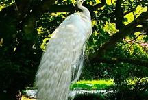 ptaki i zwierzeta